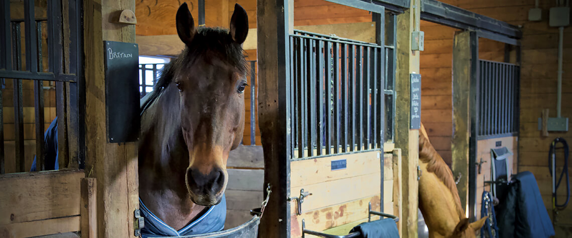 Equestrian Boarding And Training Programs Wesley Clover