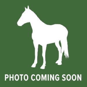 Horse Photo Coming Soon