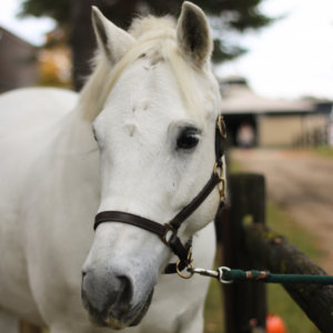 Horse Dawson Soundproof Photography