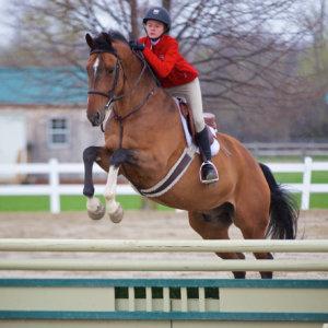Horse Derek Fifth Line Photography