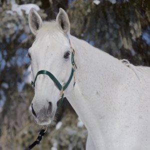 Horse Duke Fifth Line Photography