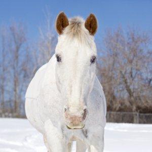 Horse Kilty Fifth Line Photography