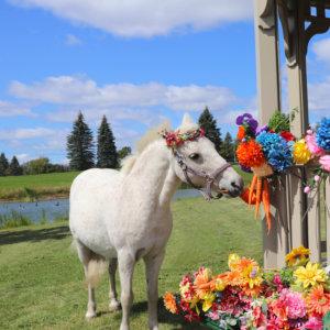 Horse Lambchops Bucketlist Photography