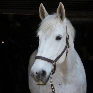 Horse Mercedes Orange Horse Studio