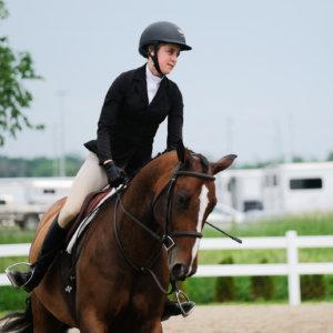 Horse Rocky Orange Horse Studio