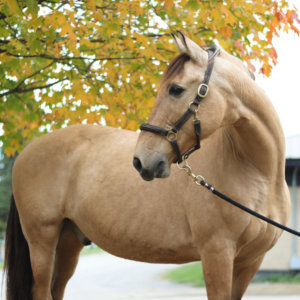 Horse Starbuck Soundproof Photography
