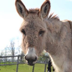 Donkey Zack