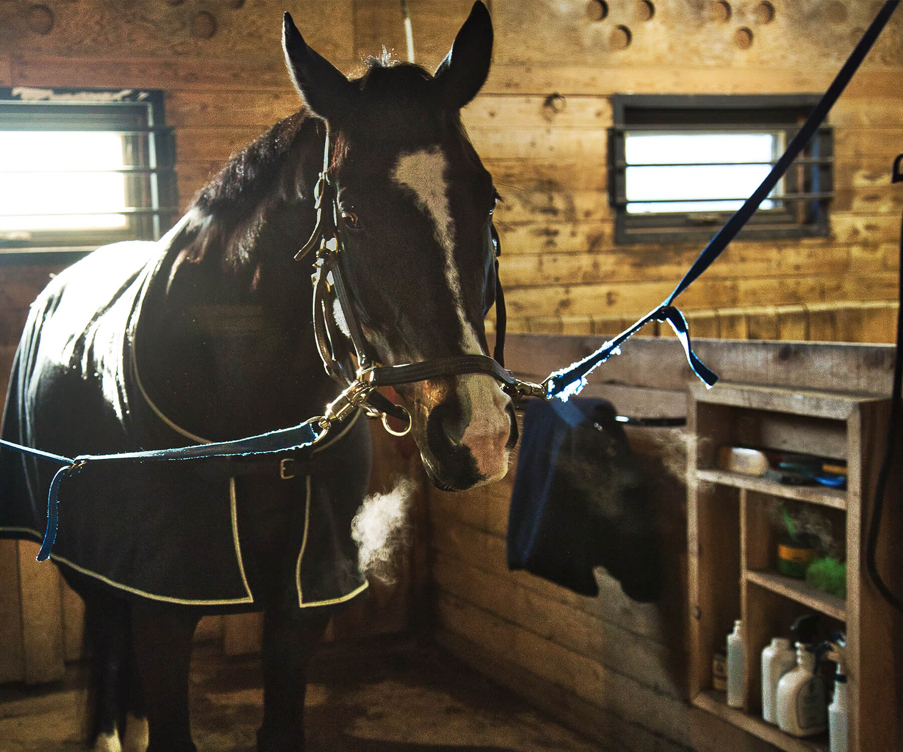Groom stall horse Fifth Line Photography